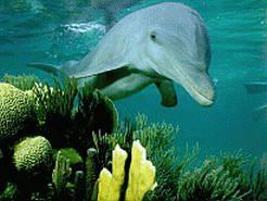 Фотообои для рабочего стола  Название фонового рисунка: Дельфин